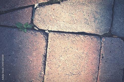 Stampa su Tela Full Frame Shot Of Paving Stones
