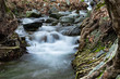 canvas print picture - Beautiful flowing river in the forest.