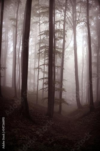 Silhouettes of trees in mystical foggy dark forest on dawn