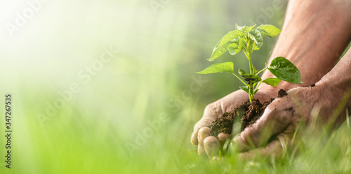 Banner view of sustainability expressed by green environment and seedlings in ha Fototapet