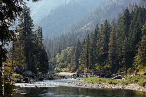Fotografie, Tablou Scenic View Of River Amidst Trees In Forest