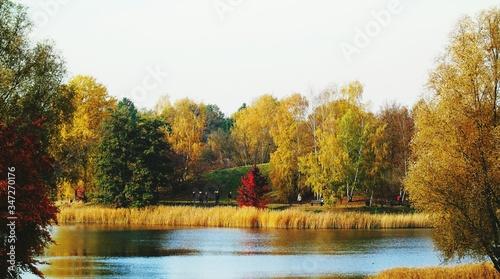 Fototapety, obrazy: Pond In Park
