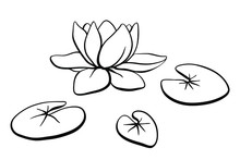 Waterlily, Lotus Flower And Leaves On The Water Surface. Hand Drawn Black Line Sketch Of Tropical Flowers And Leaves Isolated On White Background. Vector Illustration