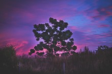 Non Urban Scene With Tree And Grass Against Pink And Blue Sky At Dusk