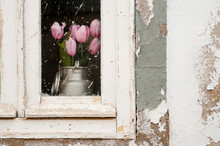 Close-up Of Flower Blooming By Window