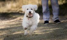 Perro Pequeño Blanco Corriendo De Frente Con Niño Detrás Lanita
