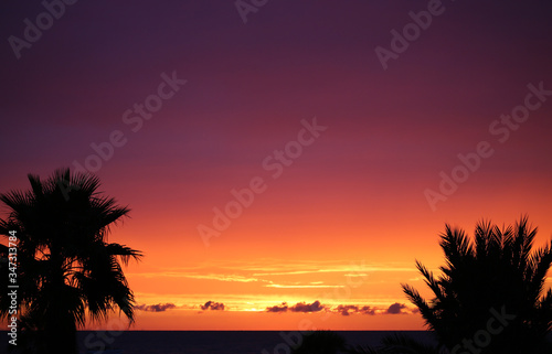 Palm trees after sunset - Florida