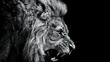 Close-up Of Lion Roaring Against Black Background