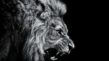 Close-up Of Lion Roaring Against Black Background - 347315721