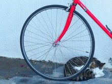Close-up Of Cat Lying Down By Bicycle Against Wall