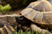 Head Turtle Tortoise Eyes Sleep Open Close Cute Brown Shell