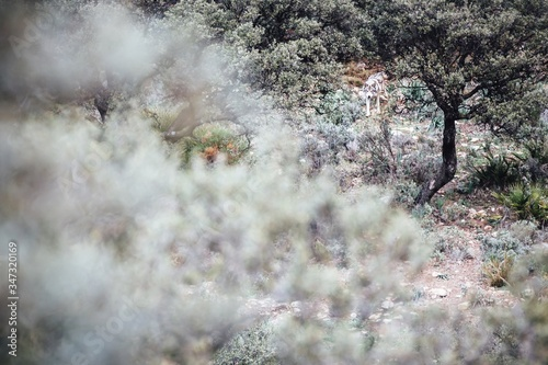 Fotomural Wolf Amidst Trees On Field