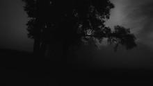 Jack O' Lantern Hanging In Tree At Night