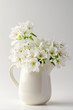 fruit tree pear flowers in a white jar isolated on