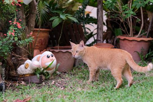 Alert Ginger Cat In The Garden Wallpaper Mural