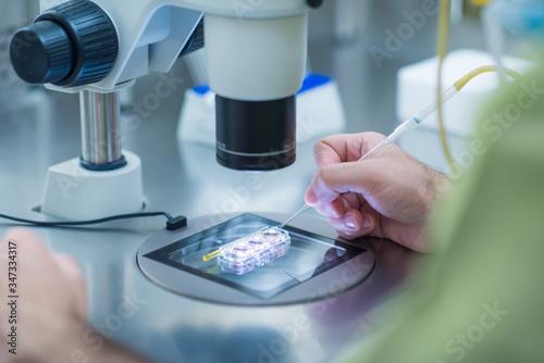 Manos de un biólogo con un microscopio en un laboratorio Canvas Print