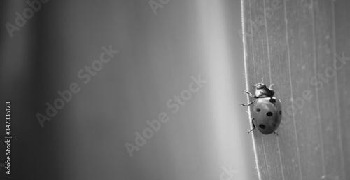 Close-up Of Lady Bug On Leaf Fotobehang