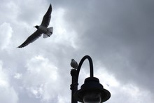 Low Angle View Of Seagulls And...