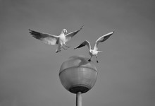 Seagulls Flying By Street Light Against Clear Sky