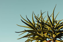 Green Plant Against Blue Sky