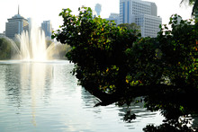 View Of Tree With Skyline In B...