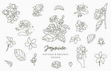 Black Jasmine Logo Collection With Leaves.Vector Illustration For Icon,logo,sticker,printable And Tattoo