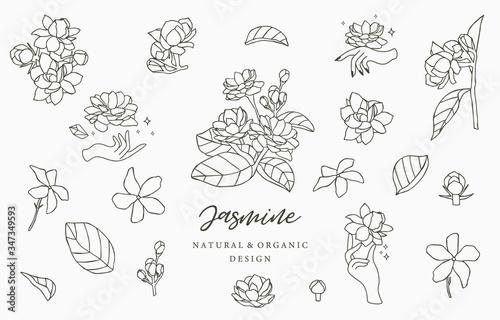 Fototapeta Black Jasmine logo collection with leaves