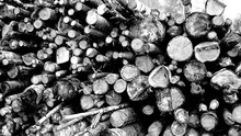 Close-up Of Stacked Logs