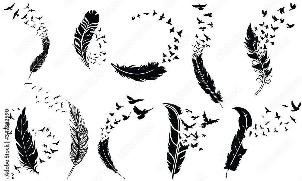 Fototapeta Feathers To Birds Flying, Vector