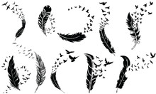 Feathers To Birds Flying, Vector