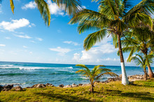 Palm Trees Growing On Grassy Field By Sea Against Sky