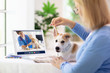 Online consultation with veterinarian doctor.