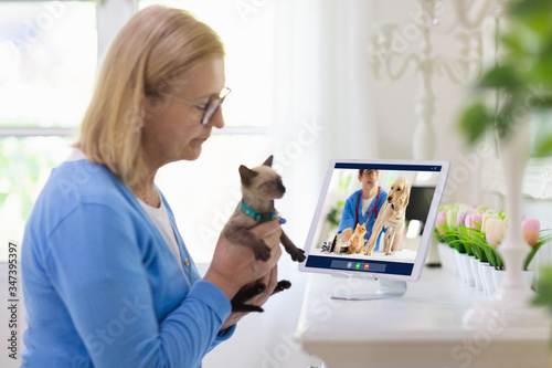 Obraz Online consultation with veterinarian doctor. - fototapety do salonu