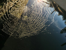High Angle View Of Wet Spider Web Against Lake