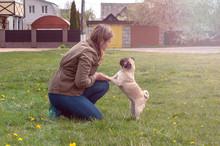 Funny Pug Dog Beg A Treat For ...