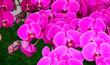 Leinwandbild Motiv Beautiful pink flowers on the nature