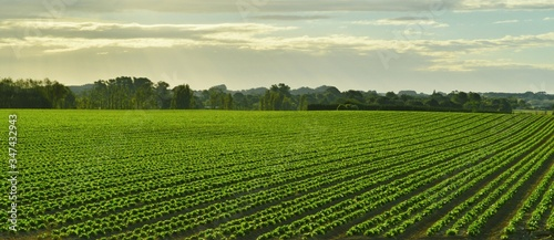 Canvas Print High Angle View Of Crop Growing In Field Against Cloudy Sky
