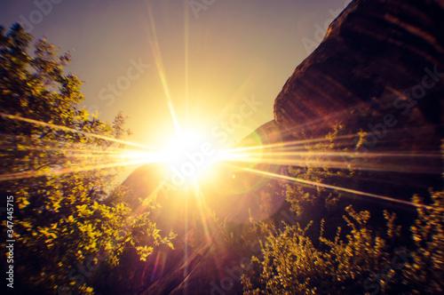 View Of Sunbeam Falling On Plants #347445715