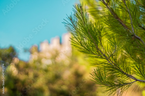Photo Low Angle View Of Palm Tree