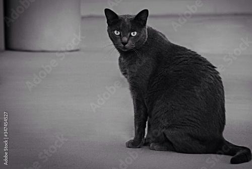 Black Cat Fototapet