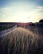 Leinwandbild Motiv Scenic View Of Field Against Sky During Sunset