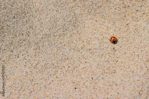Fotografia High Angle View Of Ladybug On Sand