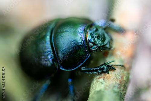 Fotografie, Tablou insecte