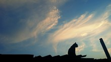 Low Angle View Of Silhouette Cat Sitting On Roof Against Sky