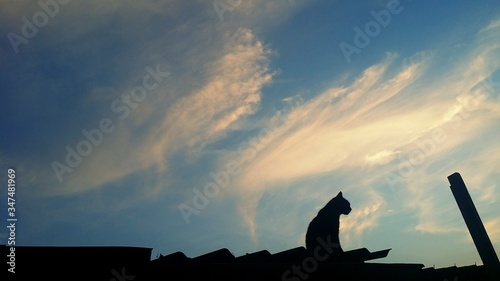 Fotografia Low Angle View Of Silhouette Cat Sitting On Roof Against Sky