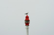 Seagull Perching On Lamp Post