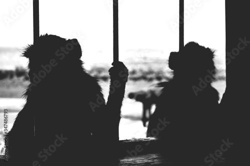 Silhouette Monkeys In Cage Fototapet