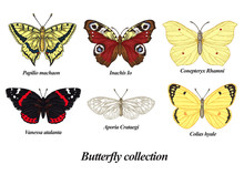 Butterflies Set. Vector Illust...
