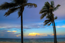 View Of Windswept Palm Trees