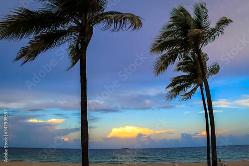 View Of Windswept Palm Trees Slika na platnu